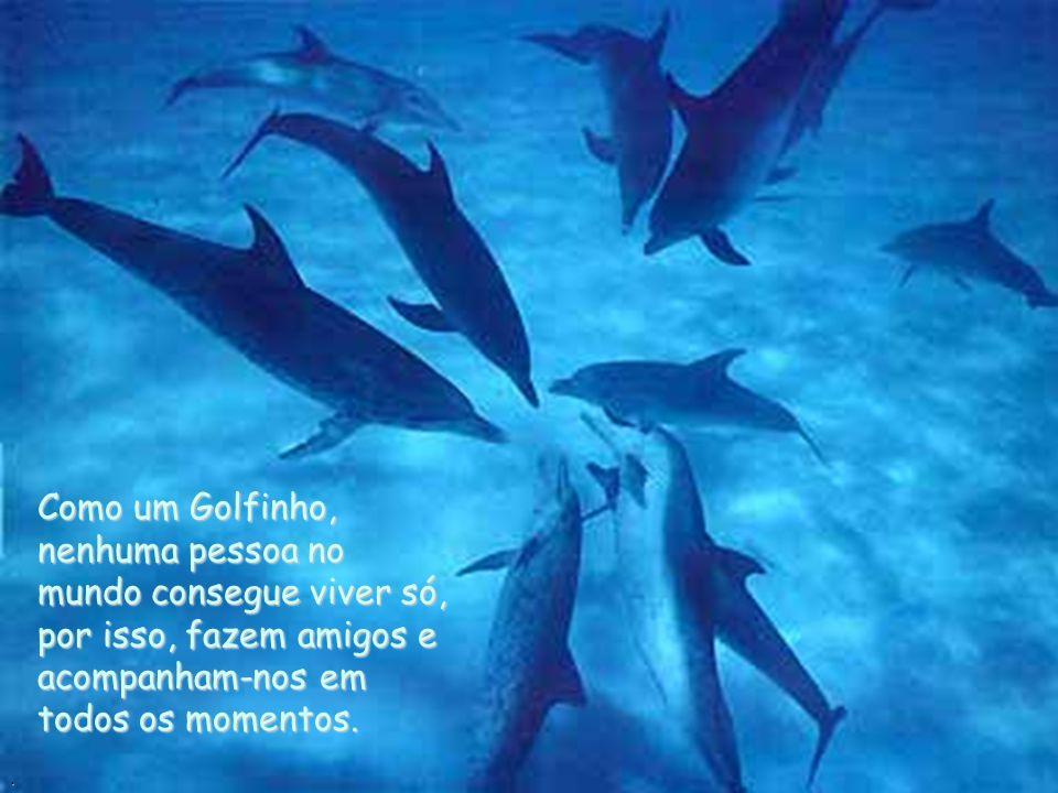 Como um Golfinho, nenhuma pessoa no mundo consegue viver só, por isso, fazem amigos e acompanham-nos em todos os momentos.