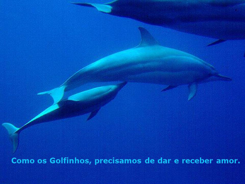 Como os Golfinhos, precisamos de dar e receber amor.