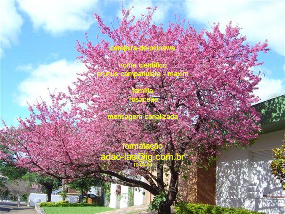 adao-las@ig.com.br formatação cerejeira-de-okinawa nome científico