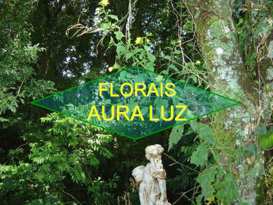 FLORAIS AURA LUZ