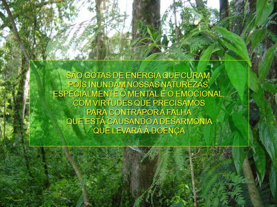 SÃO GOTAS DE ENERGIA QUE CURAM, POIS INUNDAM NOSSAS NATUREZAS,