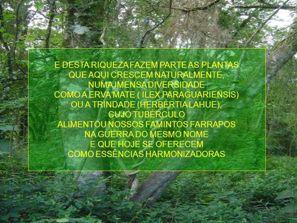 E DESTA RIQUEZA FAZEM PARTE AS PLANTAS QUE AQUI CRESCEM NATURALMENTE,