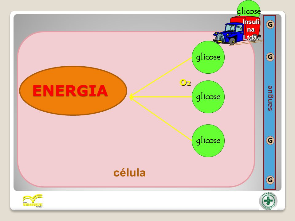 glicose Insulina Ltda. G glicose O2 G ENERGIA sangue G célula G