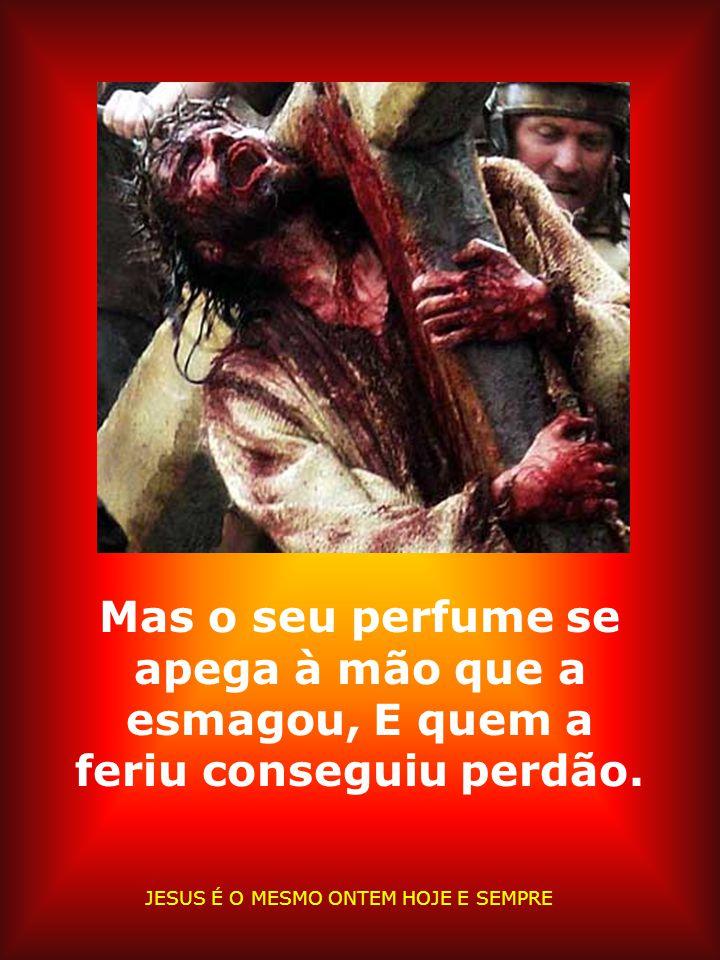 Mas o seu perfume se apega à mão que a esmagou, E quem a feriu conseguiu perdão.