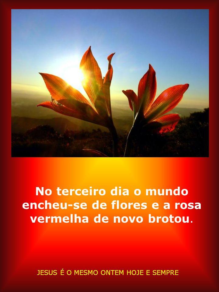 No terceiro dia o mundo encheu-se de flores e a rosa vermelha de novo brotou.