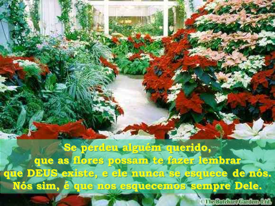Se perdeu alguém querido, que as flores possam te fazer lembrar