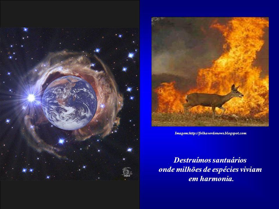 Destruímos santuários onde milhões de espécies viviam