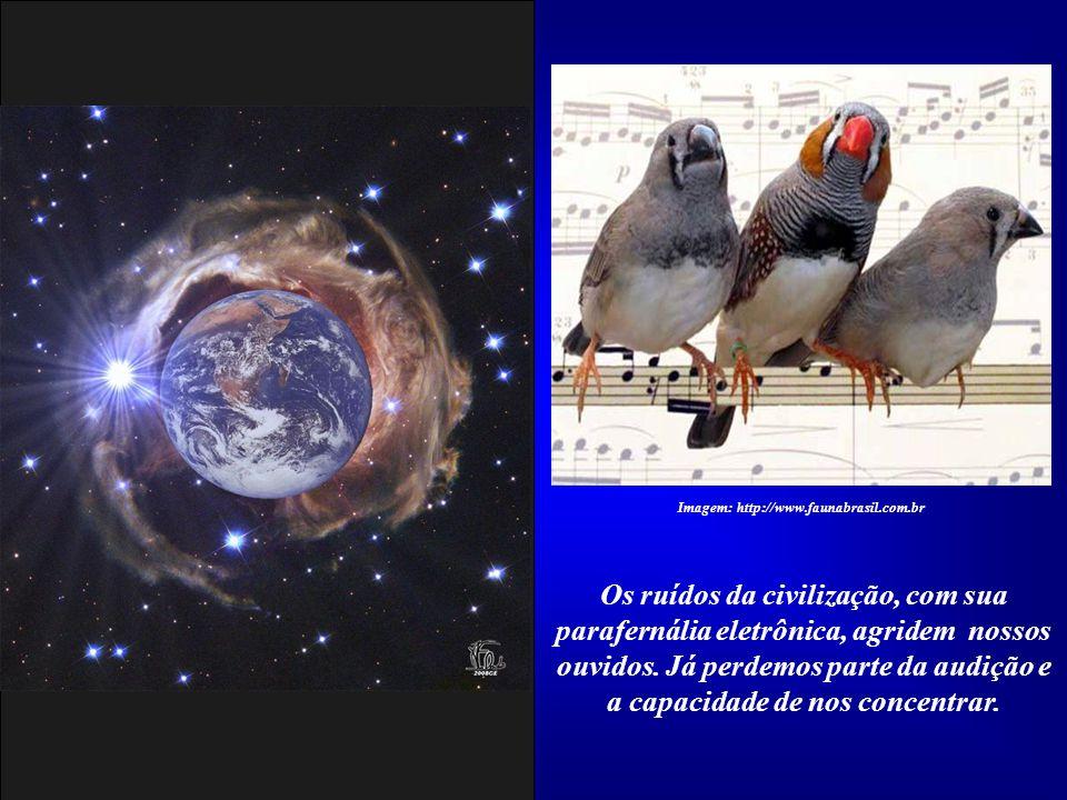 Imagem: http://www.faunabrasil.com.br
