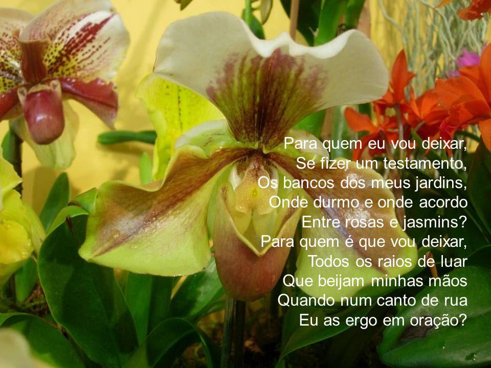 Para quem eu vou deixar, Se fizer um testamento, Os bancos dos meus jardins, Onde durmo e onde acordo Entre rosas e jasmins.