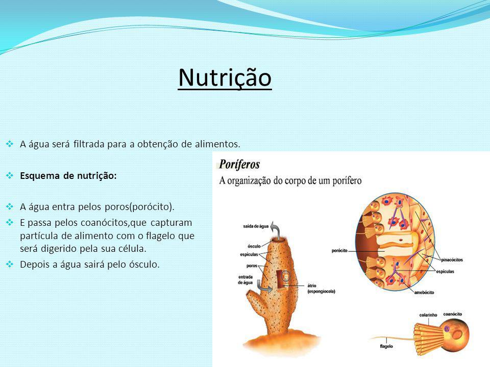 Nutrição A água será filtrada para a obtenção de alimentos.