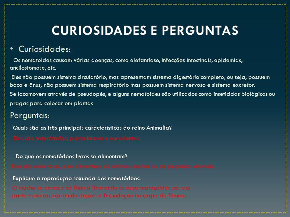 CURIOSIDADES E PERGUNTAS