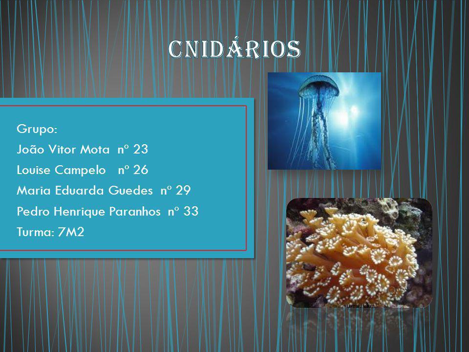 Cnidários Grupo: João Vitor Mota nº 23 Louise Campelo nº 26