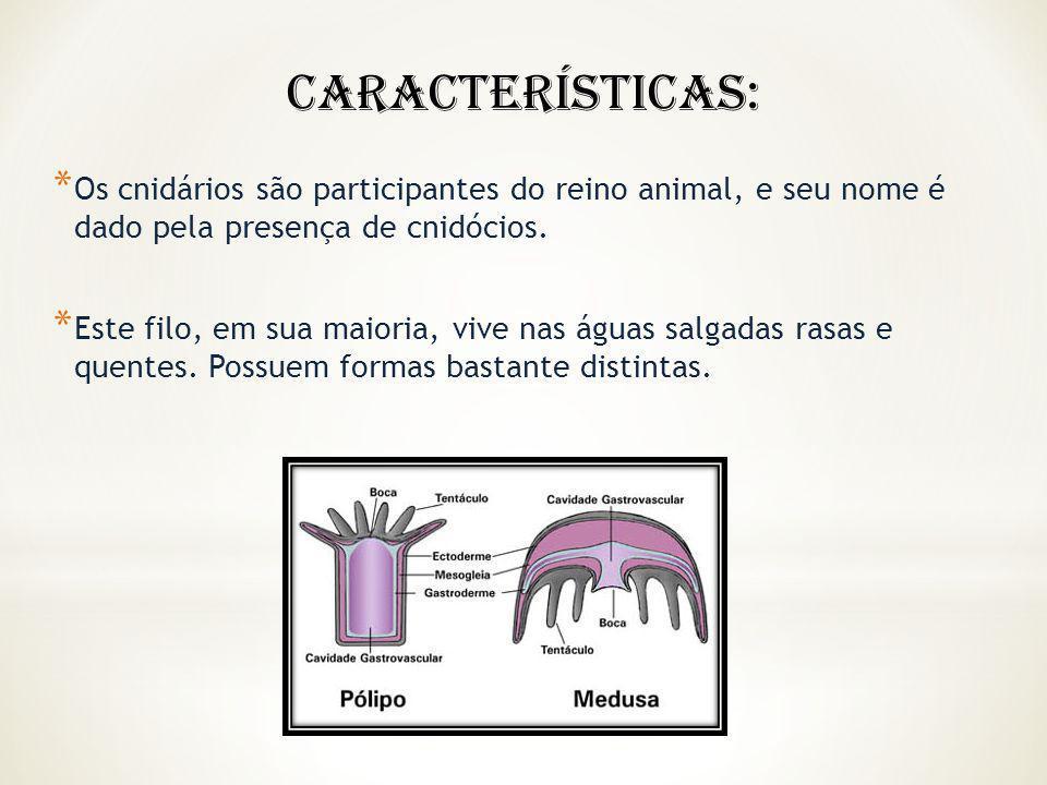 Características: Os cnidários são participantes do reino animal, e seu nome é dado pela presença de cnidócios.