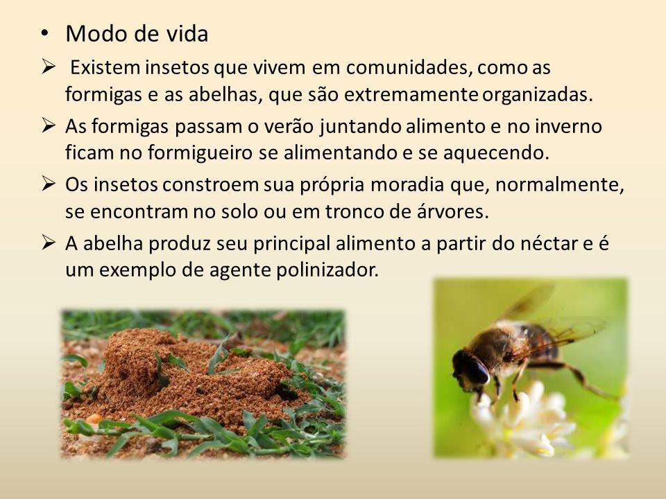 Modo de vida Existem insetos que vivem em comunidades, como as formigas e as abelhas, que são extremamente organizadas.