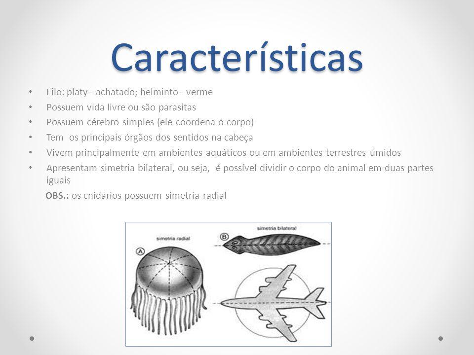 Características Filo: platy= achatado; helminto= verme