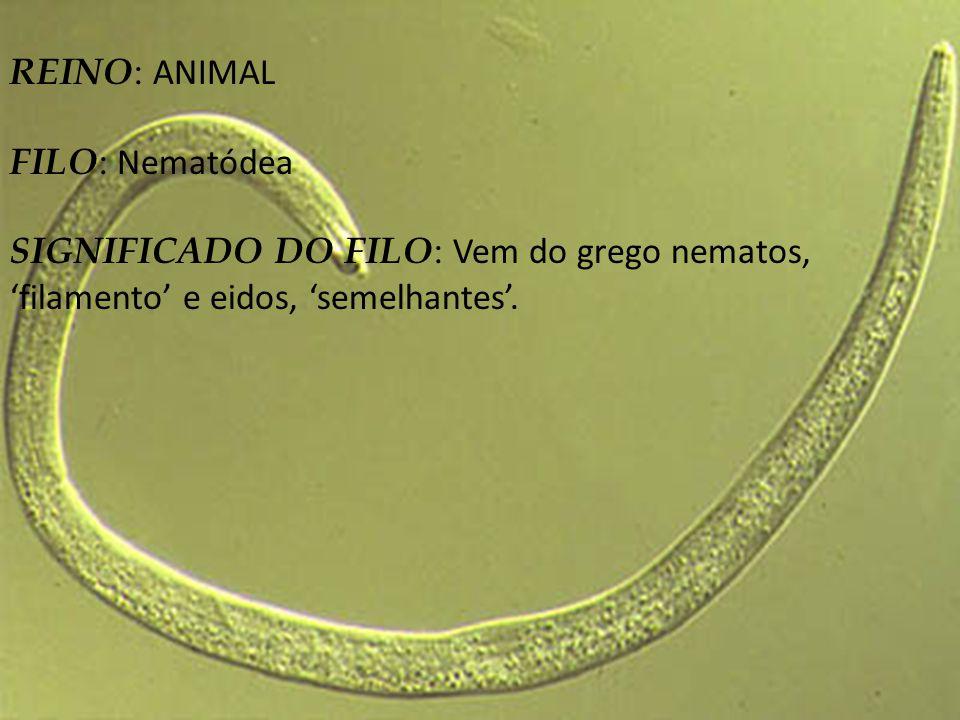 REINO: ANIMAL FILO: Nematódea.