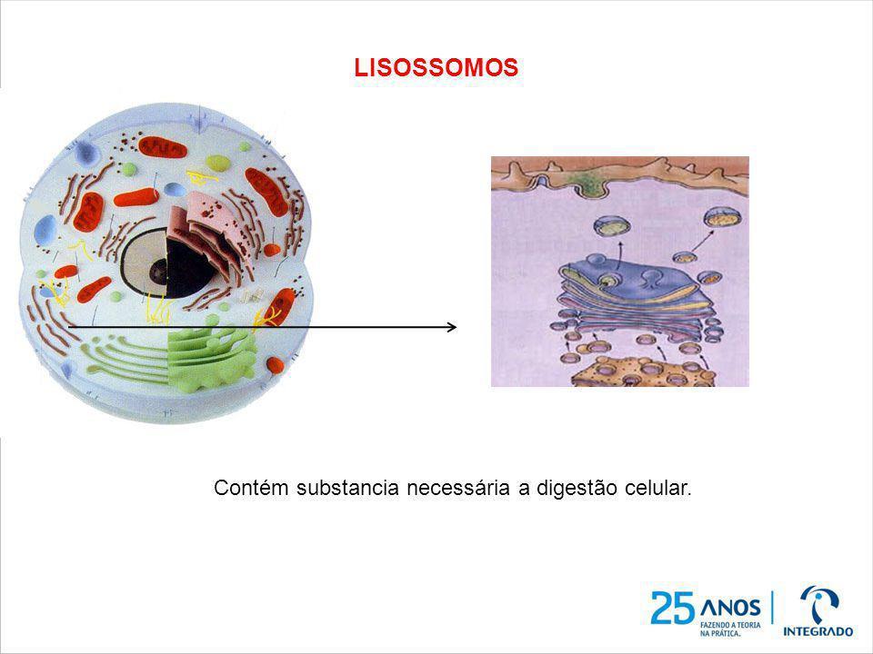 LISOSSOMOS Contém substancia necessária a digestão celular.