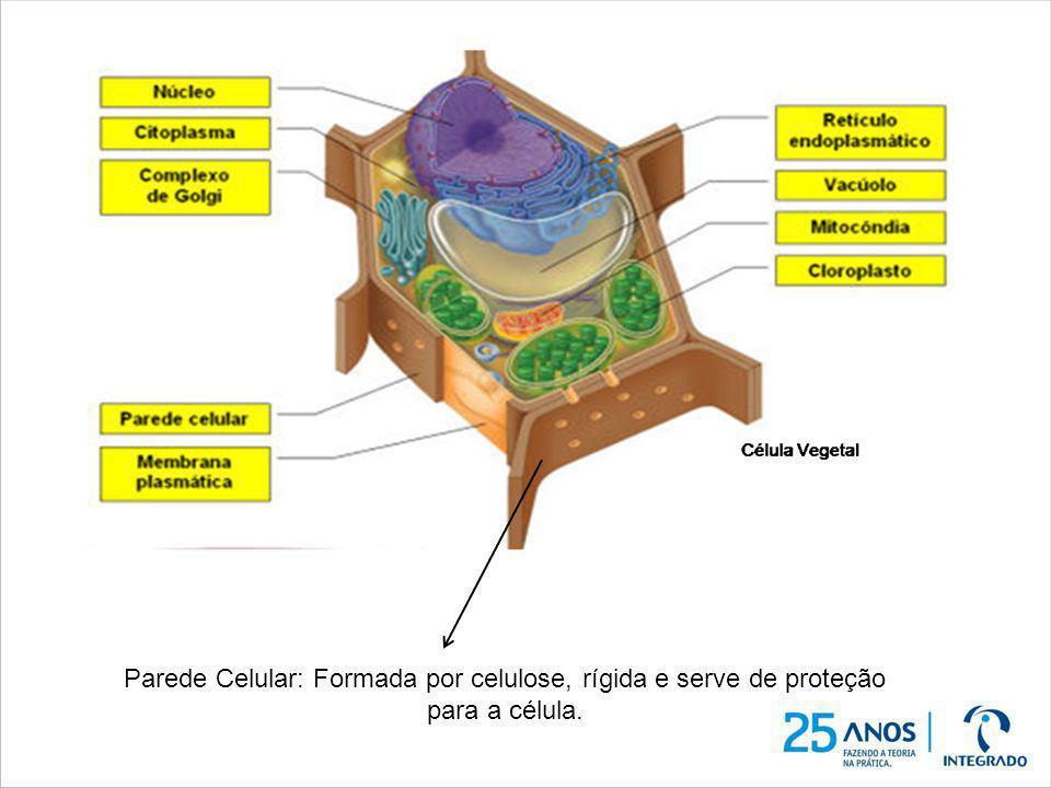 Estruturas constituem somente a célula VEGETAL