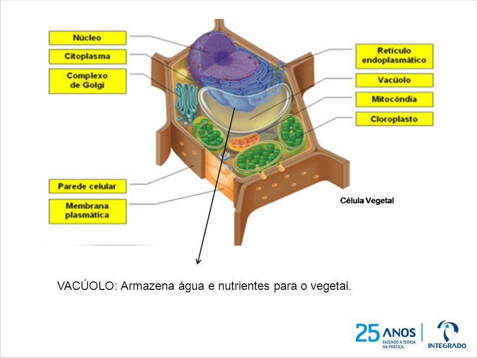 VACÚOLO: Armazena água e nutrientes para o vegetal.