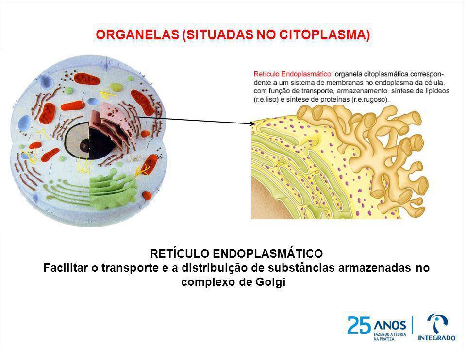 ORGANELAS (SITUADAS NO CITOPLASMA)