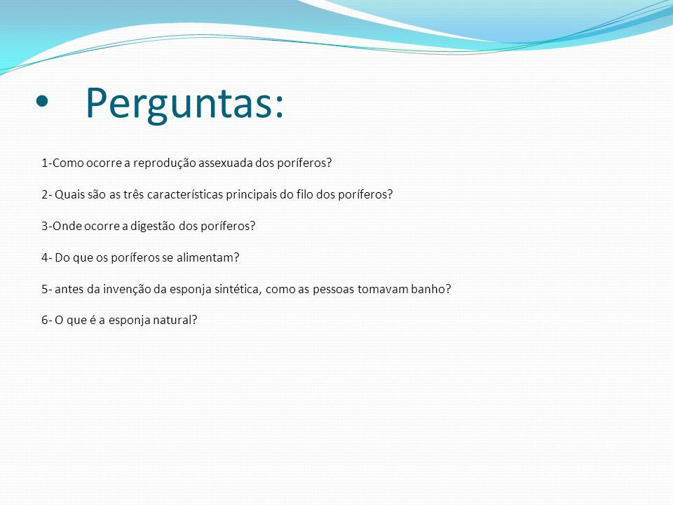 Perguntas: 1-Como ocorre a reprodução assexuada dos poríferos