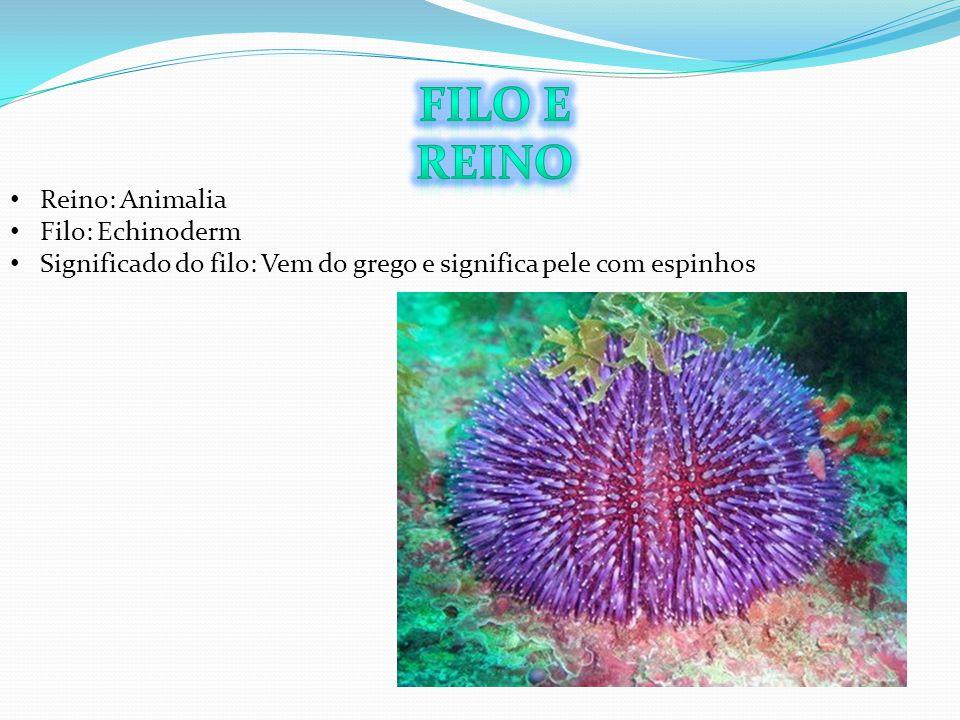 Filo e Reino Reino: Animalia Filo: Echinoderm