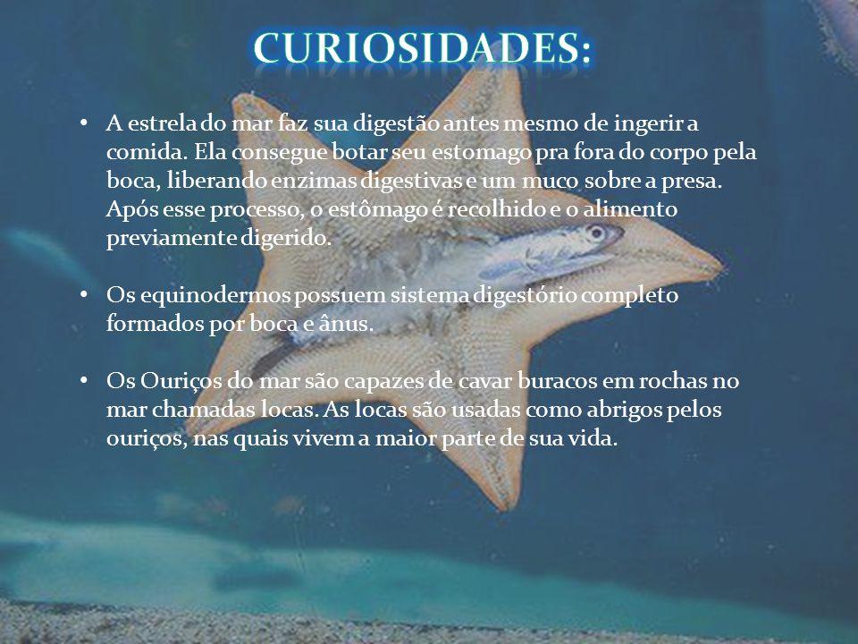 Curiosidades: curiosidades