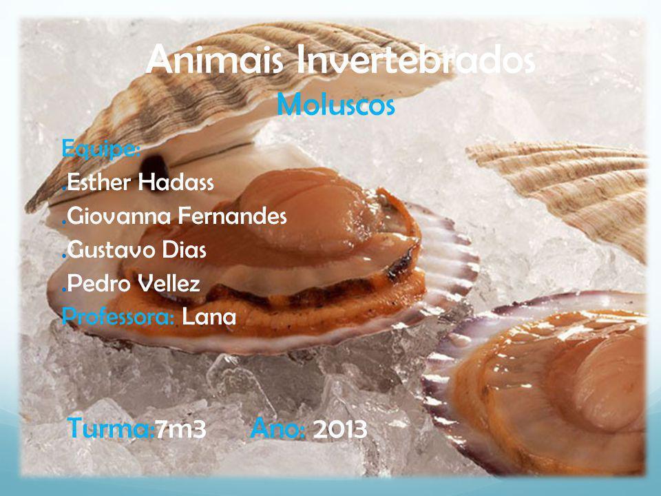 Animais Invertebrados Moluscos