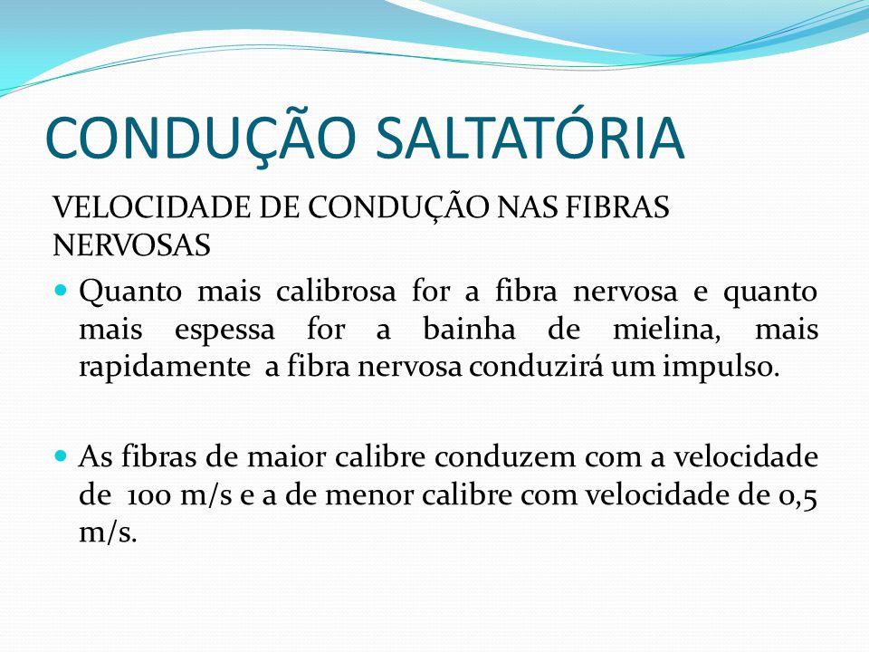 CONDUÇÃO SALTATÓRIA VELOCIDADE DE CONDUÇÃO NAS FIBRAS NERVOSAS