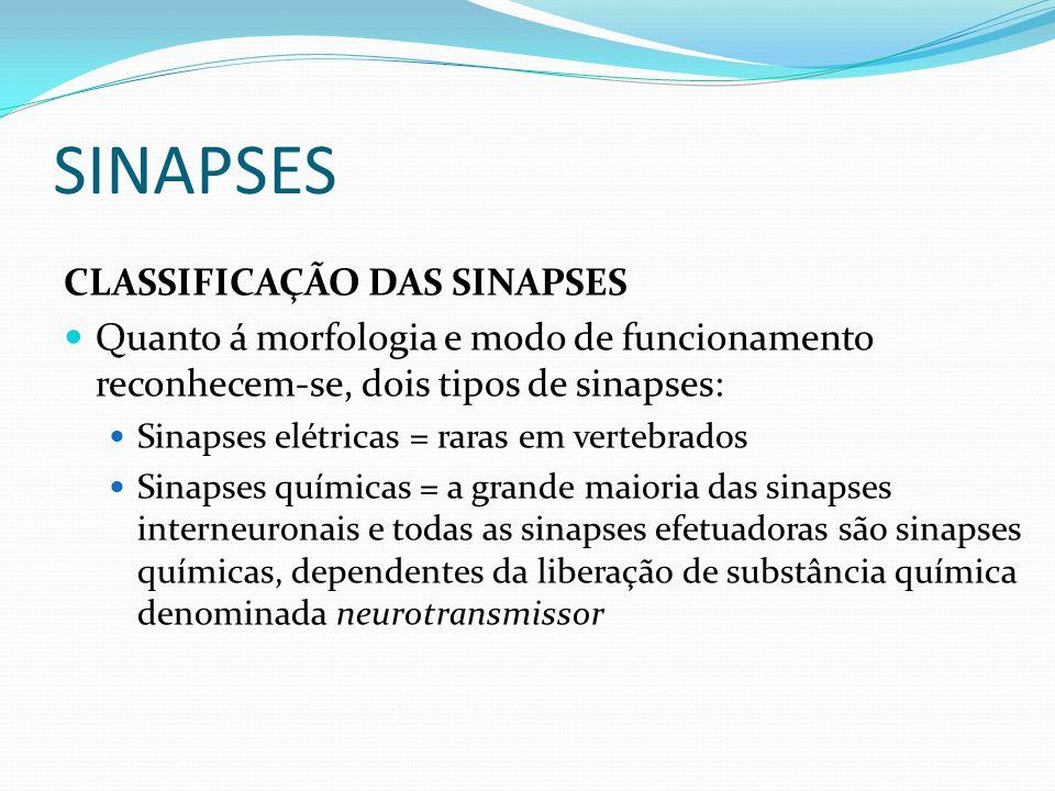 SINAPSES CLASSIFICAÇÃO DAS SINAPSES