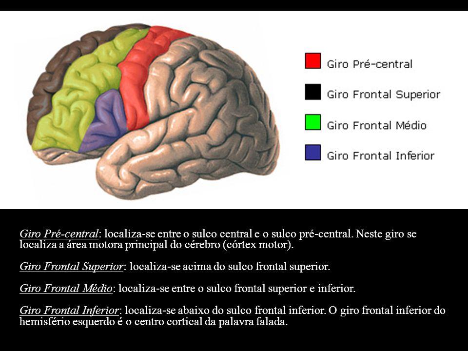 Giro Pré-central: localiza-se entre o sulco central e o sulco pré-central. Neste giro se localiza a área motora principal do cérebro (córtex motor).