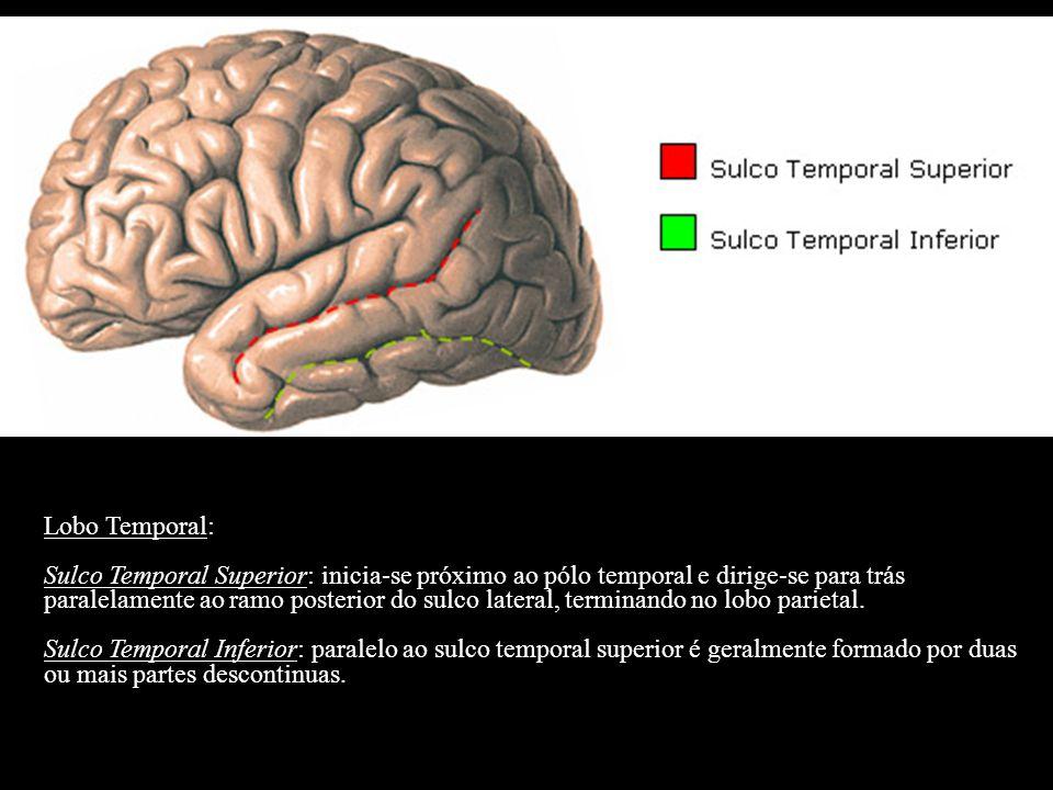 Lobo Temporal: