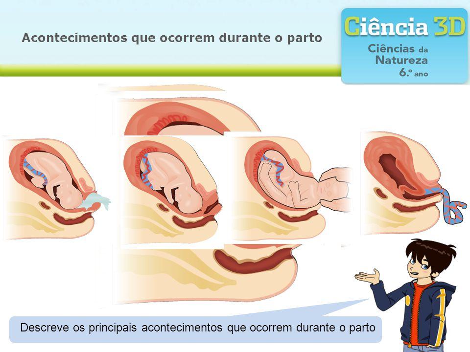 Acontecimentos que ocorrem durante o parto