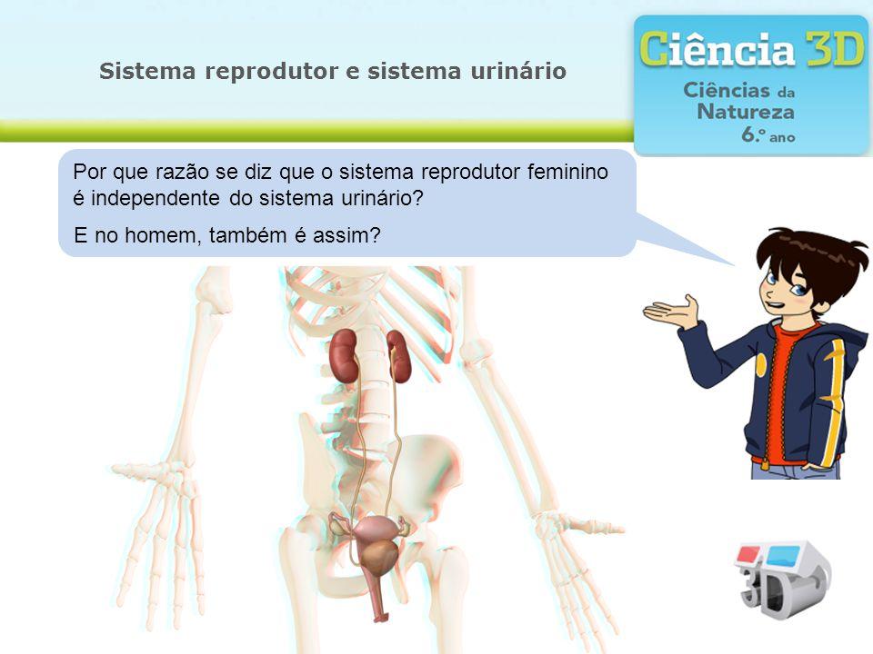 Sistema reprodutor e sistema urinário