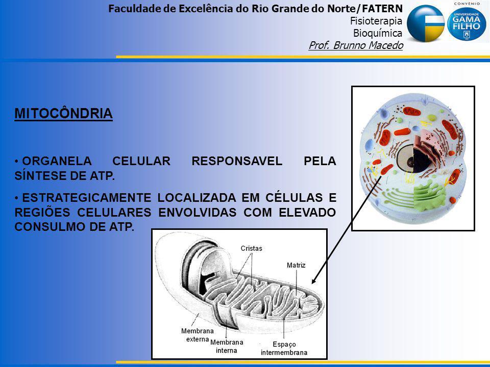 MITOCÔNDRIA ORGANELA CELULAR RESPONSAVEL PELA SÍNTESE DE ATP.
