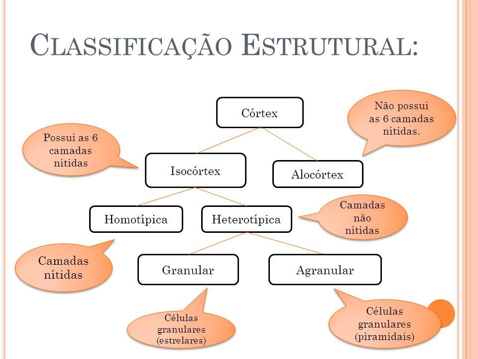 Classificação Estrutural: