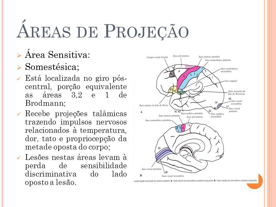 Áreas de Projeção Área Sensitiva: Somestésica;