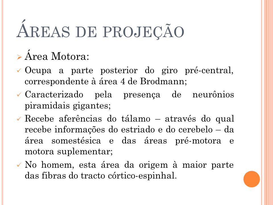 Áreas de projeção Área Motora: