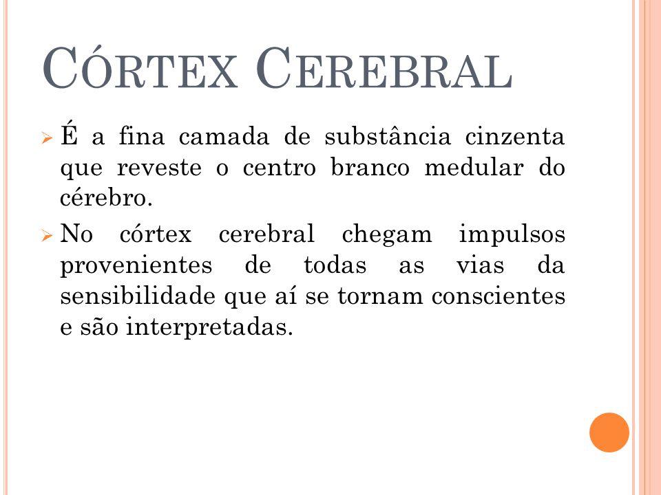 Córtex Cerebral É a fina camada de substância cinzenta que reveste o centro branco medular do cérebro.