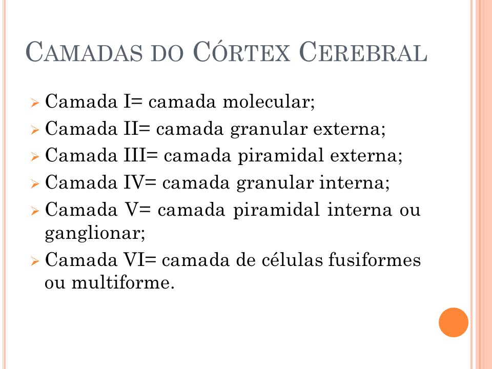 Camadas do Córtex Cerebral