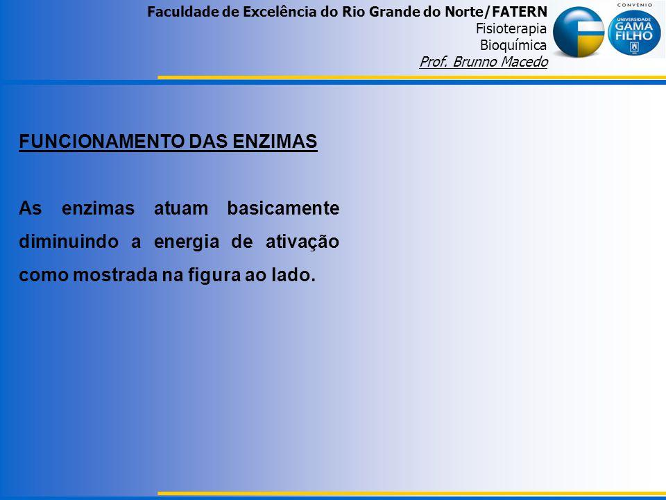FUNCIONAMENTO DAS ENZIMAS