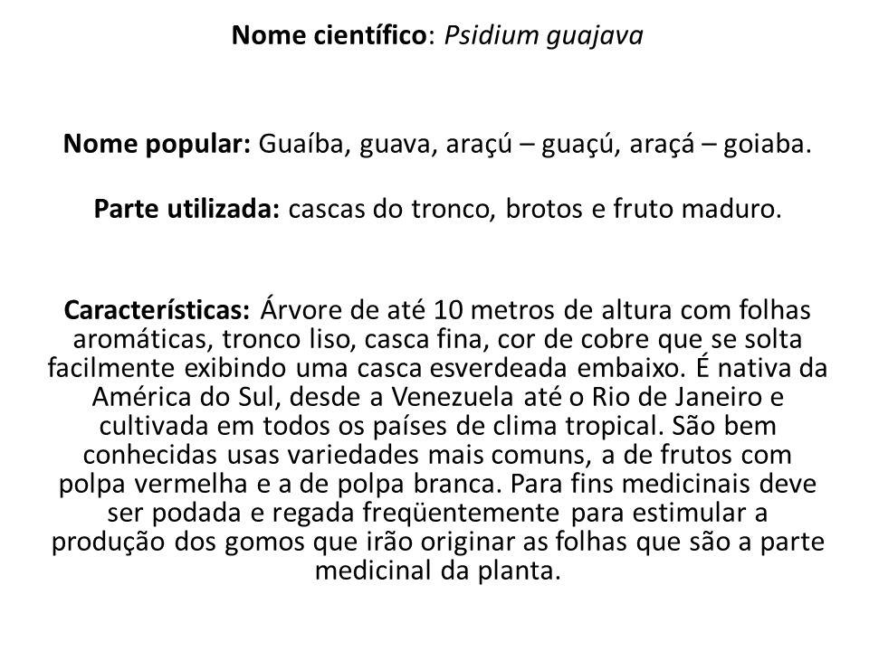 Nome científico: Psidium guajava