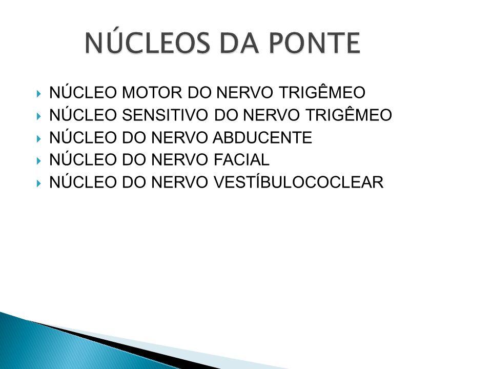 NÚCLEOS DA PONTE NÚCLEO MOTOR DO NERVO TRIGÊMEO