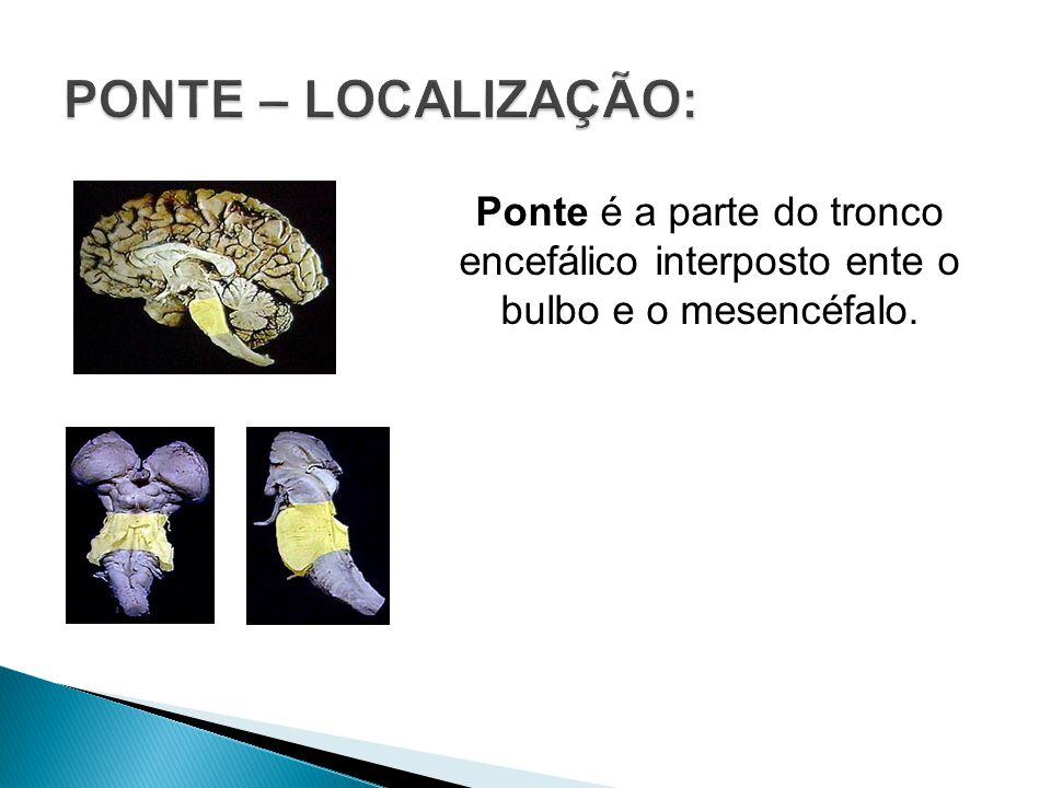 PONTE – LOCALIZAÇÃO: Ponte é a parte do tronco encefálico interposto ente o bulbo e o mesencéfalo.