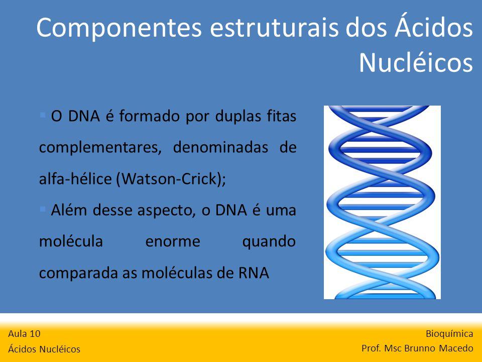 Componentes estruturais dos Ácidos Nucléicos