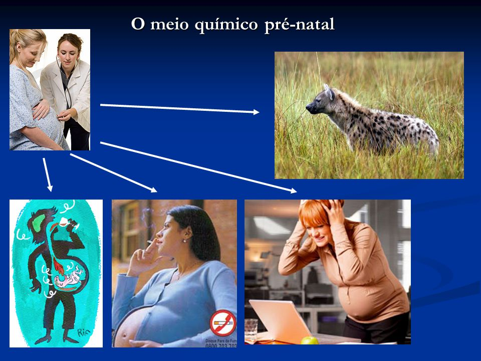 O meio químico pré-natal