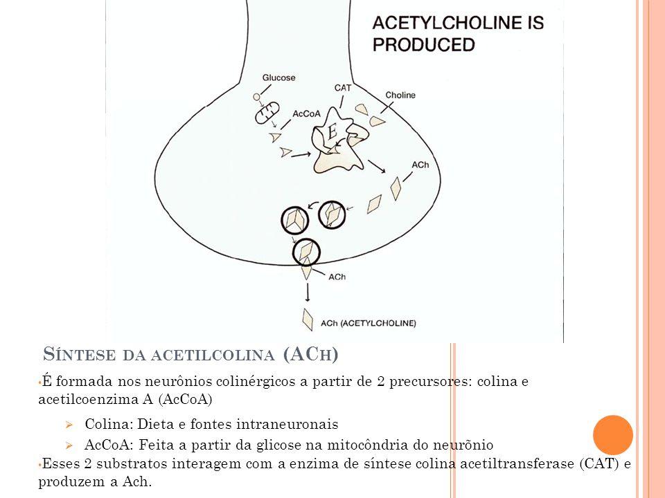 Síntese da acetilcolina (ACh)