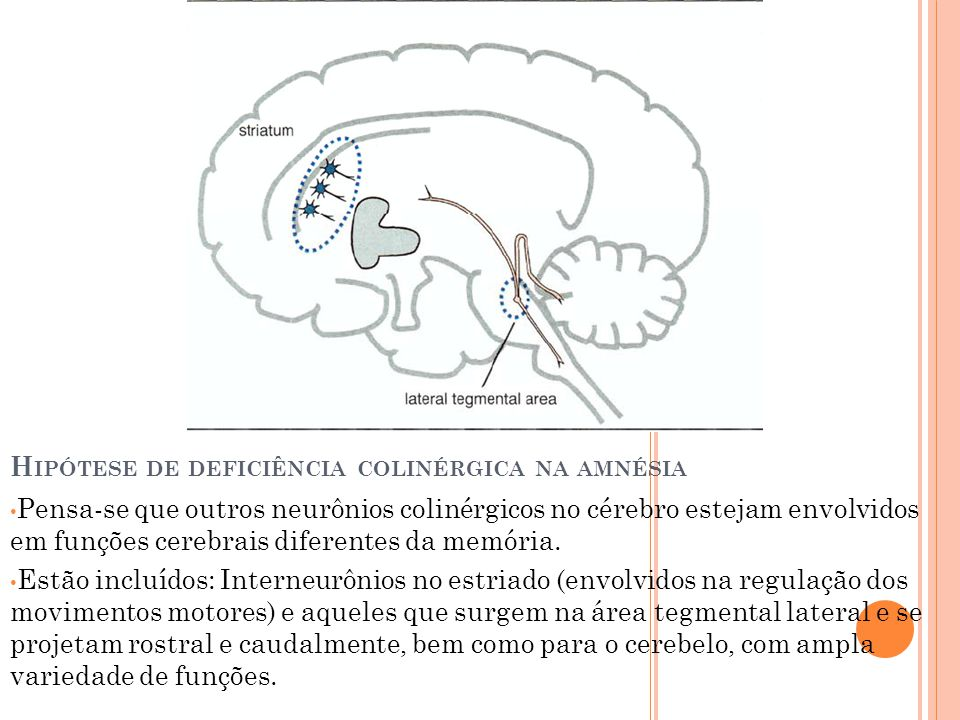 Hipótese de deficiência colinérgica na amnésia