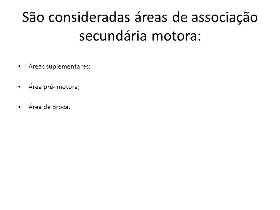 São consideradas áreas de associação secundária motora: