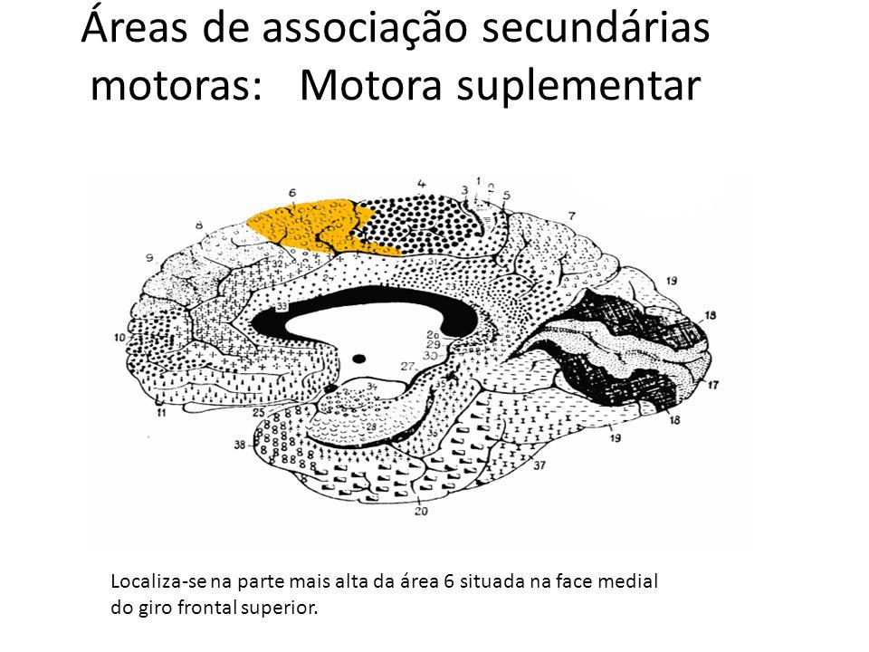 Áreas de associação secundárias motoras: Motora suplementar